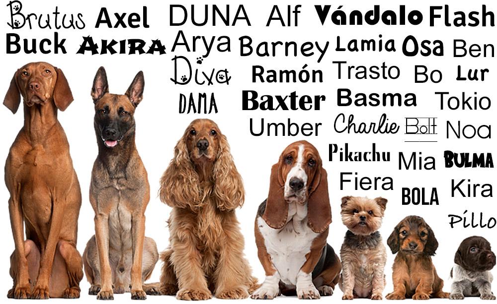 Los Nombres Para Perros Que Jamás Se Te Ocurrirían